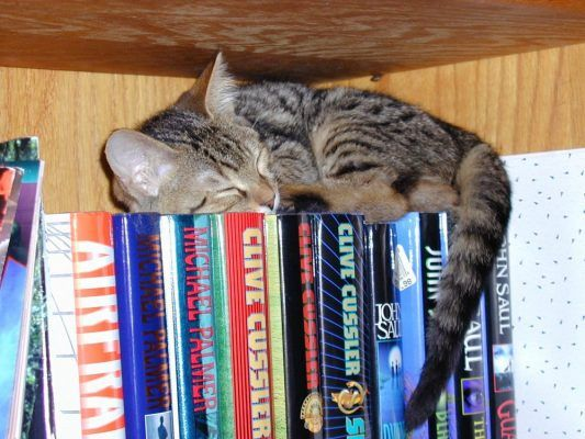 cat sleeping on books e1551609859246