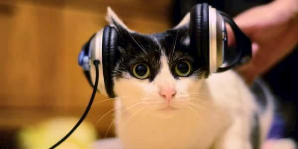 listening skills foreign language