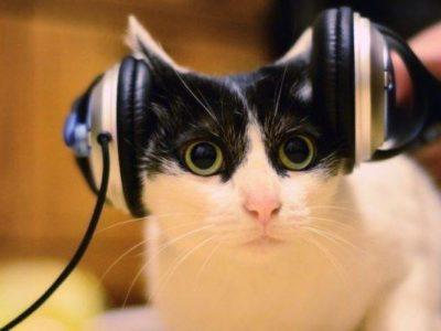 best italian audio course review