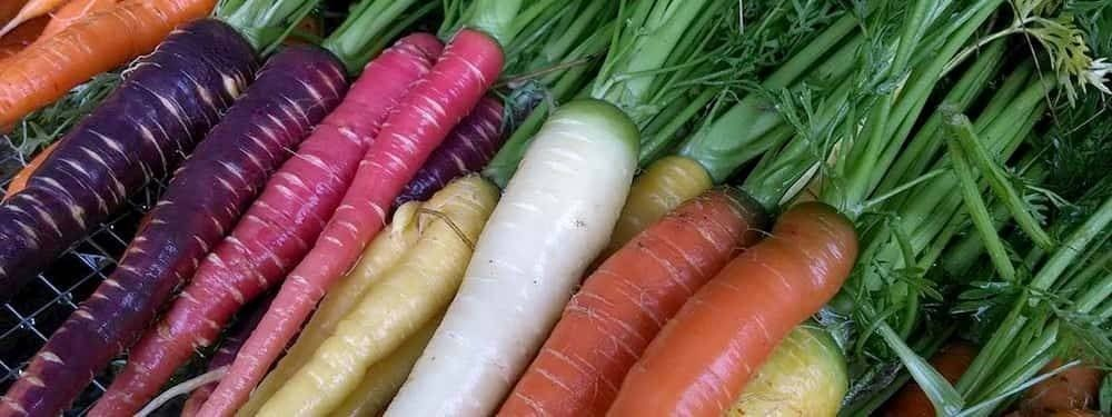 italian short story carrots
