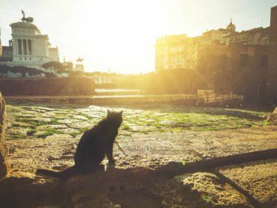 Animali al Colosseo