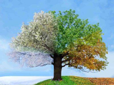 Gli effetti delle stagioni