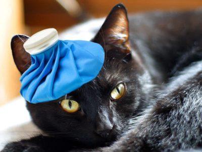 Il gatto malato