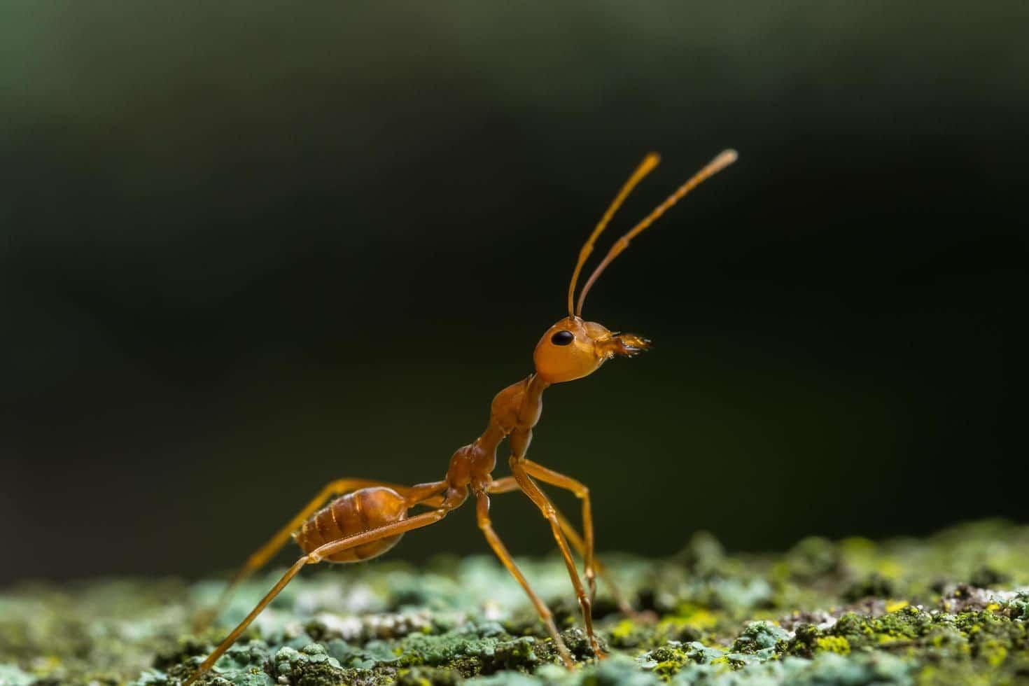 La piccola formica