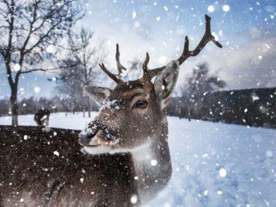 Voglio essere una renna