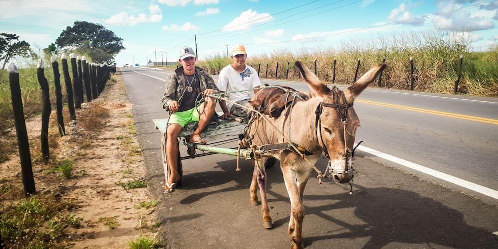 short italian story donkey 1